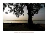 Wonderful Mali 43