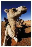 Mauritanie - Puiser la vie 20