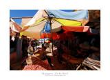 Madagascar - The Red Island 276