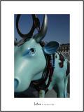 Cows in Lisboa 12