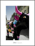 Cows in Lisboa 18