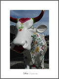 Cows in Lisboa 21