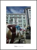 Cows in Lisboa 22