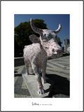 Cows in Lisboa 27