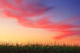 Cloud & Corn 20080911