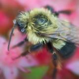 Wet Bumblebee 19821