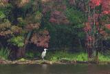 Heron On The Far Shore 19919