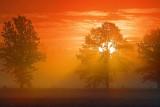 Trees In Misty Sunrise 19994