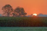 Trees In Sunrise 20085