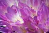 Purple Flowers 20360