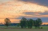 Cloud Of Seagulls 20461
