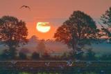 Seagulls At Sunrise 20080923
