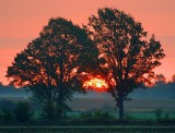 Sunrise Between Two Trees 20636