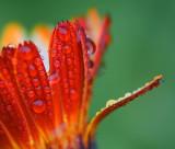 Wet Orange Flower 21030