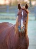 Curious Horse 21860