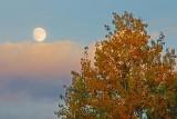 Autumn Moon 22463