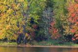 Autumn Color 21349