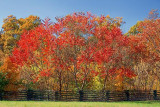 Autumn Along The Trace 24595