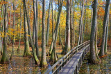 Along the Natchez Trace Parkway Gallery