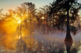 Misty Lake Martin Sunrise 25802