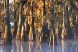 Lake Martin Morning 25950