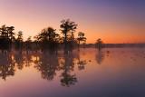 Lake Martin Dawn 26019