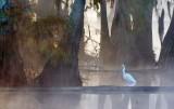 Egret In Lake Martin 26207