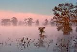 Lake Martin Sunrise Fog 26049