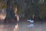Egret At Lake Martin 26678