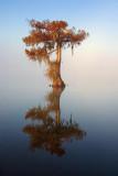 Lone Cypress 26802