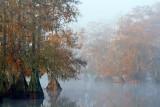 Foggy Lake Martin 26746
