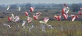 Birds Taking Wing 27889