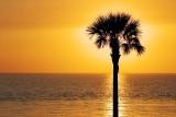 Palm Against Sunrise 28201