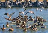 Fowl Feeding Frenzy 28818