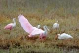 Wading Birds 29407
