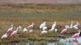 Wading Birds 29406