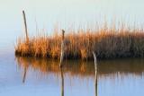 Wetland Hammock 29679
