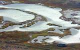 Wetlands 29908