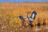 Heron Landing 30018