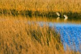 Hunkered Herons 20081211