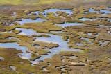 Wetlands 29887