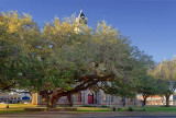 Goliad Hanging Tree 43988
