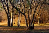 Goliad Trees 43700