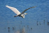 The Egret Is Flying 45301