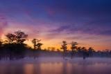 Lake Martin Dawn 46648