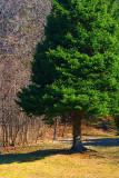 Lone Pine 20090419