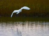 Egret In Flight 32955 (No Contrast Mask)