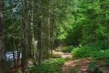 Morris Island Trail 49540