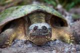 Turtle Closeup 20090618