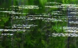 Lily Pads 20090627